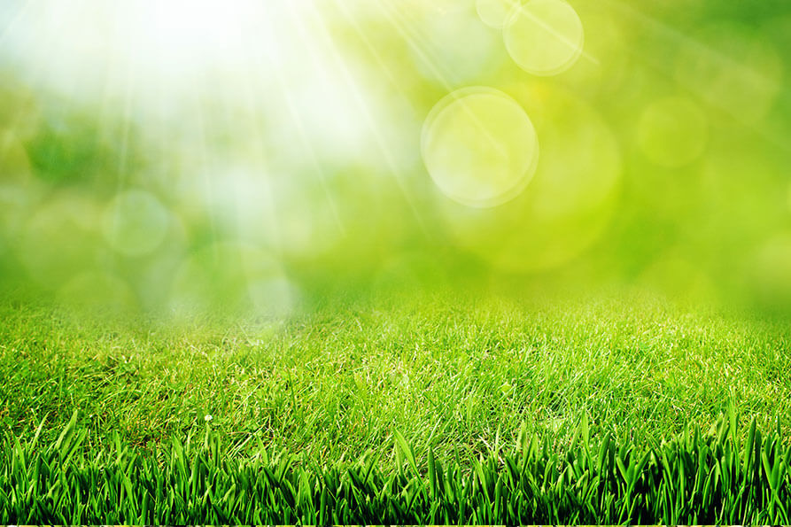 Grass Maintenance - How to Have the Perfect Lawn