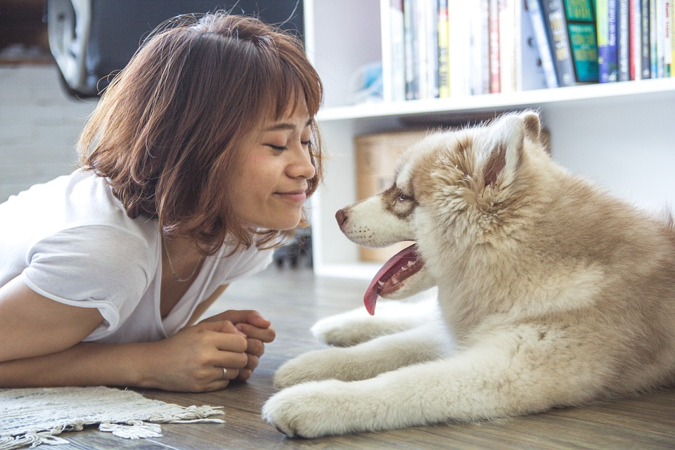 How to Care for Pets During a Home Sale